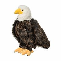 Adler Bald Eagle