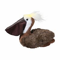 Beachy Pelican