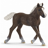 Black Forest Foal